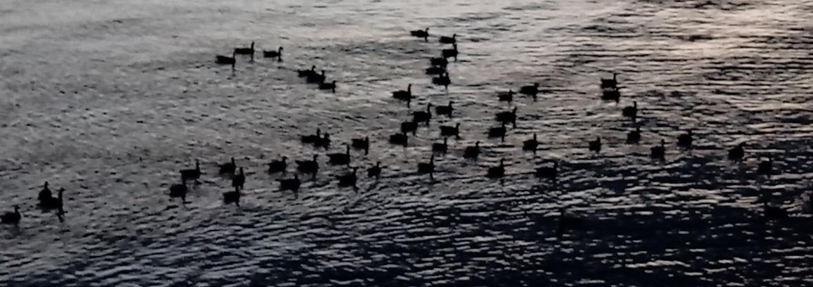 Birds_on_Seneca